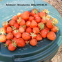 Strawberries picked on June 21st (Fragaria x ananassa (Garden strawberry))