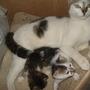 my cat's