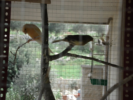 my bird's /canary.
