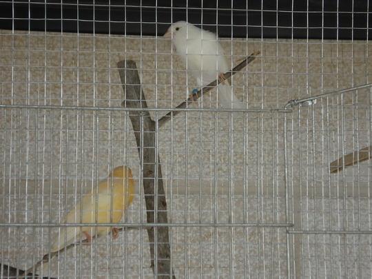 my bird's /canary