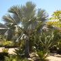 Gary_wood_garden_palm_garden_06_19_10_002