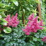 Garden_2007_015