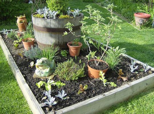 Herb Garden - May 2008