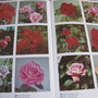 The dictionary of Garden Plants in Colour.