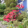 red rhodie (rhododendron)