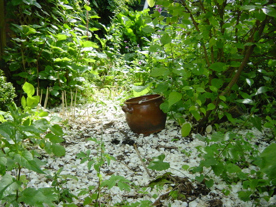 'white carpet' from petals  of mock-orange in our garden in Holland (2004)