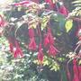 Garden_2007_018
