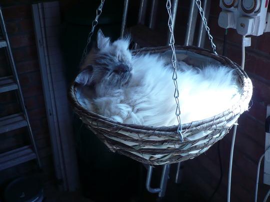 Dolly in basket