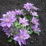 Bijou_front_garden_minature