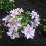 Bijou_front_garden_minature_2