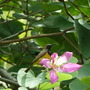 Sunbird on a flower in the tree