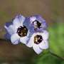Wild Flower....
