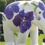 elephant lfower