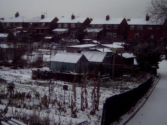 bleak winter on the allotments