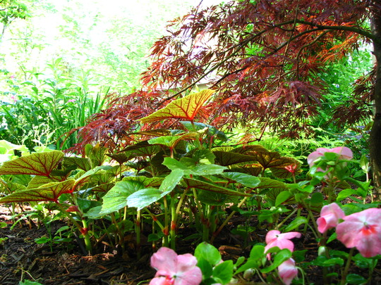 favorite plant combinations