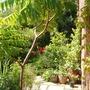 Garden_2007_032