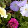 Garden_12_101