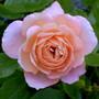 Garden_12_031