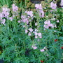 Garden_2010_067