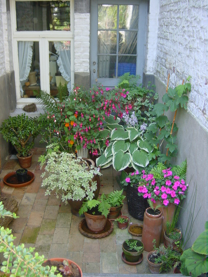 plants near shaded entrance of basement 2003 grows on you