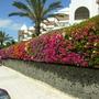 Lanzarote_june_2010_003