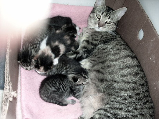 they are about three wks old