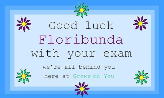 Good Luck Floribunda