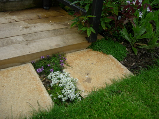New Thyme Step
