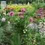 Garden of Peonies and flowers