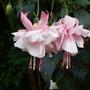 Garden_031