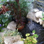 The Pond now settled
