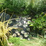 and pond again