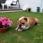 Harvey likes flowers