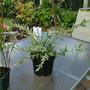 New_plants_002