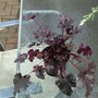 New_plants_007