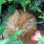 Garden_flowers_july_2010_31