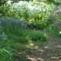 Woodland_walk_2
