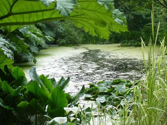 Pine Lodge Water Gardens