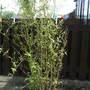Bargain Bamboo