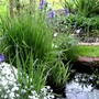 Small pond in top of back garden with Irises out.