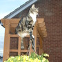 cat showing off hanging basket