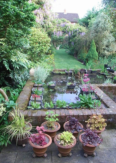 Back garden - May 2008