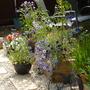 Wild flowers......