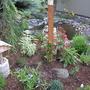 Newly Re-Arranged Pond Garden