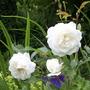 Garden_july_012