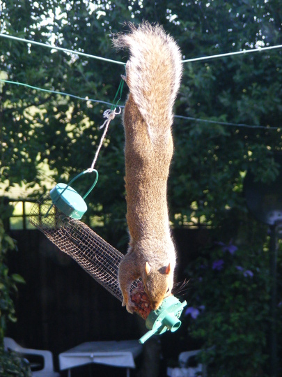 Whats hanging on the washing line ?