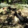 New Rock garden