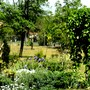 View from path near Mulberry bed looking towards lower garden and orchard.