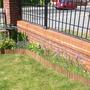 wild flower border/poppies