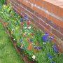 wild flower border/poppies 2